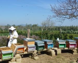 Il mondo delle api Apicoltura Apoidea