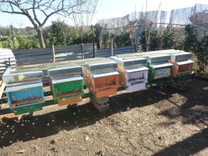 Raccolta polline Apicoltura ApoIDEA